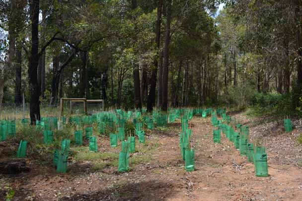 Landcare grants hitting the ground