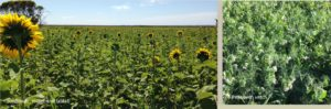 Realising the potential of soil with cover cropping and other practices