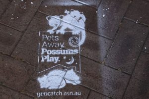 Pets away, possums play