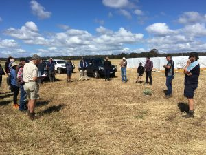 Establishing and grazing saltbush